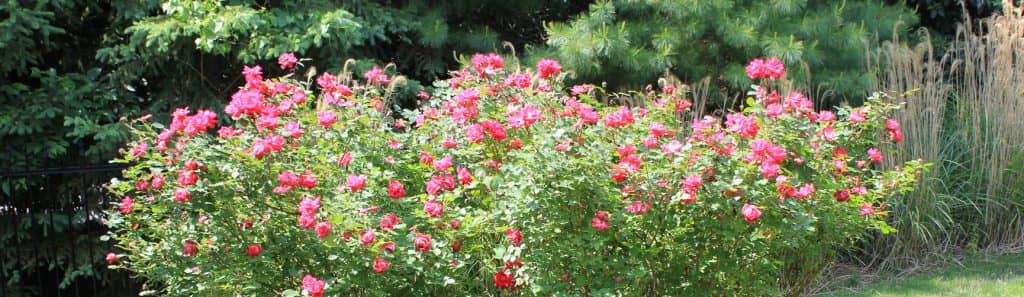 flowers landscaping