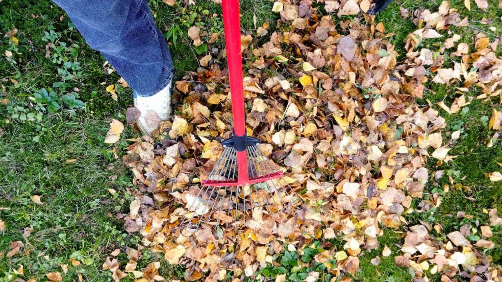 landscape maintenance for fall