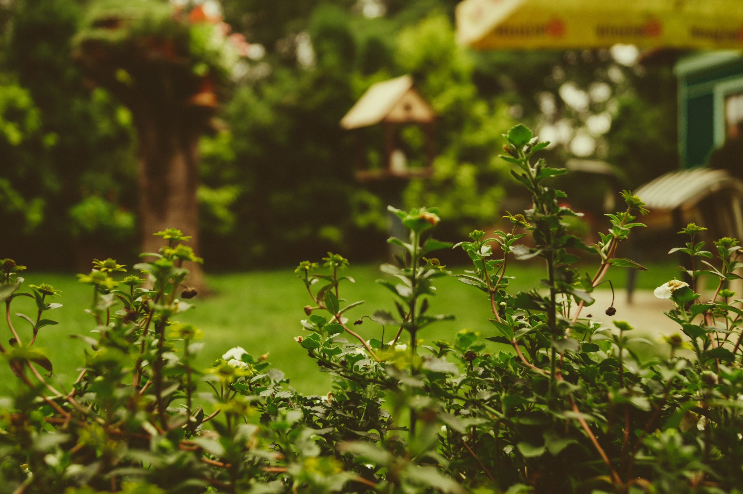 outdoor landscaping experts