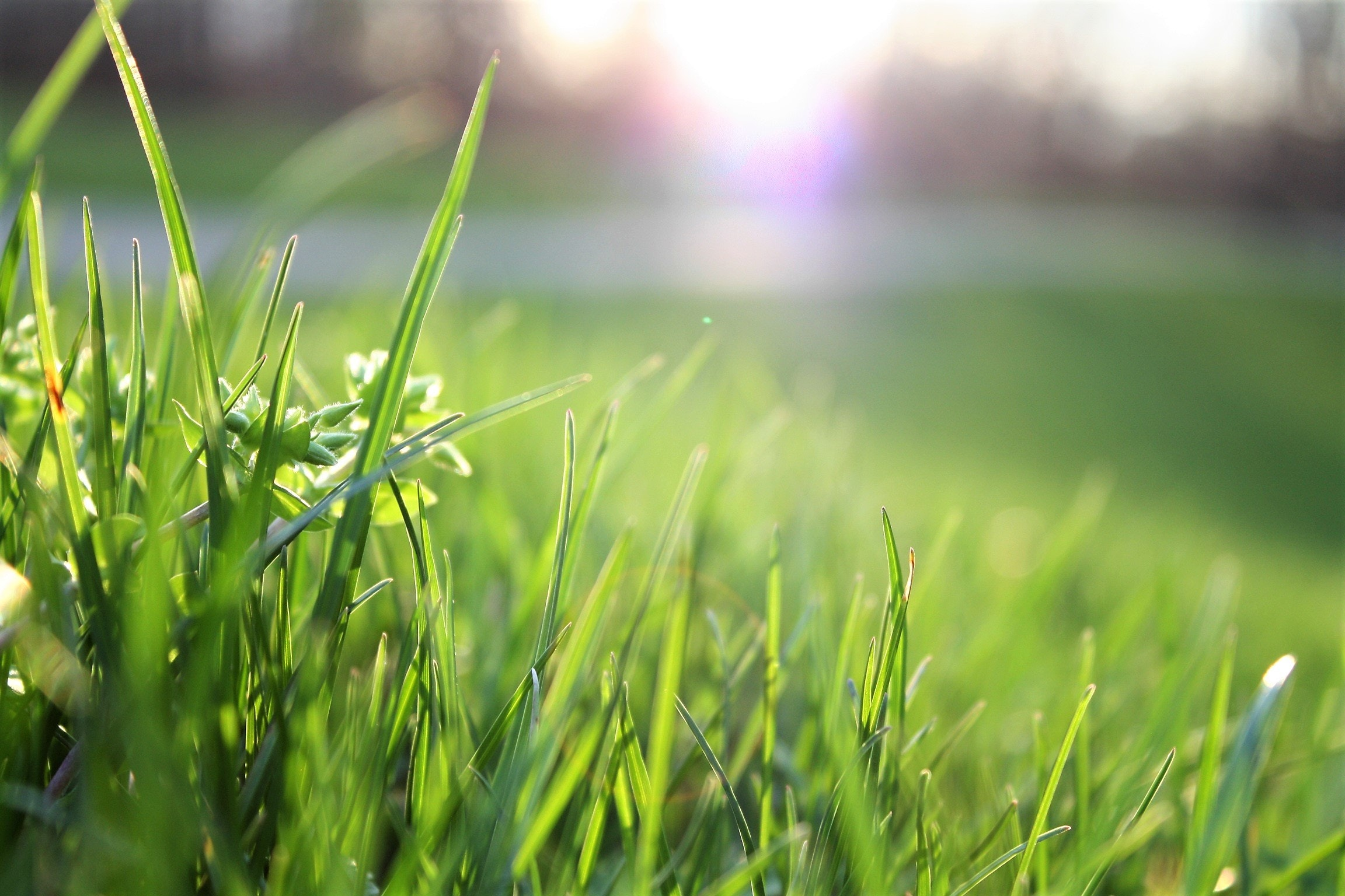 Lawn care business services keep this grass green